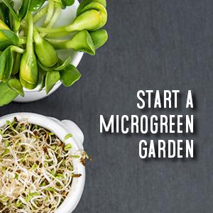 start a microgreen garden